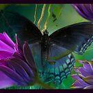 Flighty3 by Susan Ringler