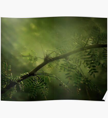 Meditation of Green Poster