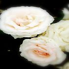White Roses  by cjcphotography