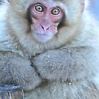 Japanese Macaque by Fike2308