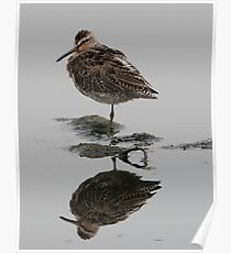 Short Billed Dowitcher Poster