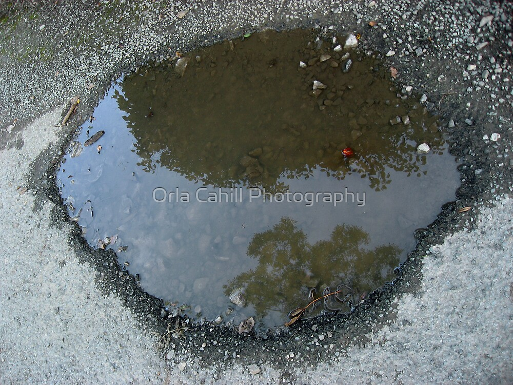Berry Puddle by Orla Cahill Photography