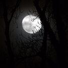 Lovely Luna by Steiner62