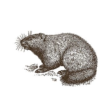 Vintage Groundhog Illustration by ValentinaHramov