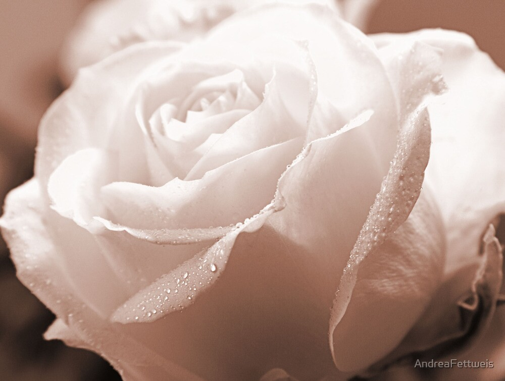 White Satin by AndreaFettweis