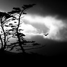 rider on the storm by Steiner62