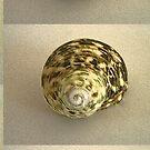 Shell  by patjila
