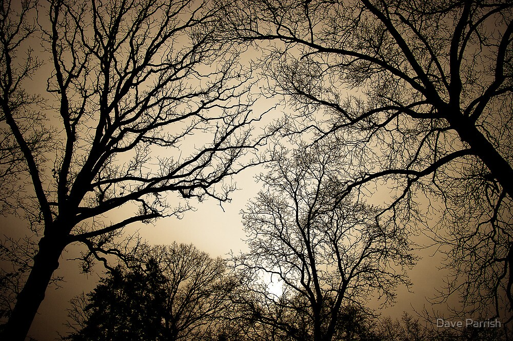 The Trees by Dave Parrish