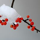Berries in Snow by Colleen Drew