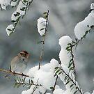 Snow Bird by ArkansasLisa