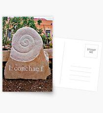 conchae Postcards