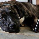 Hund - Straßenhund von laura-S