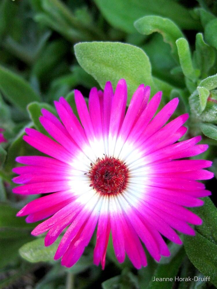 Fractal flower by Jeanne Horak-Druiff