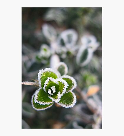 Frosty Photographic Print