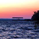A Trip To Florida by BobJohnson