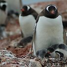 Mother & Chicks by Greg Nairn