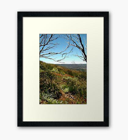Grasses of Mt Blue Rag Framed Print