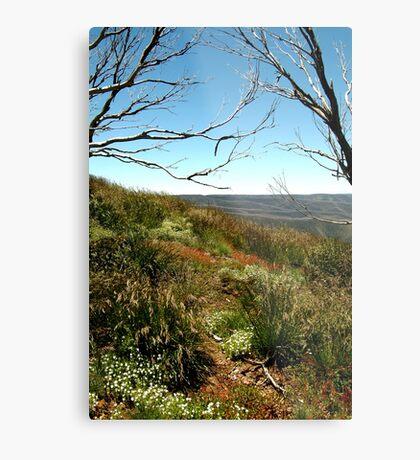 Grasses of Mt Blue Rag Metal Print