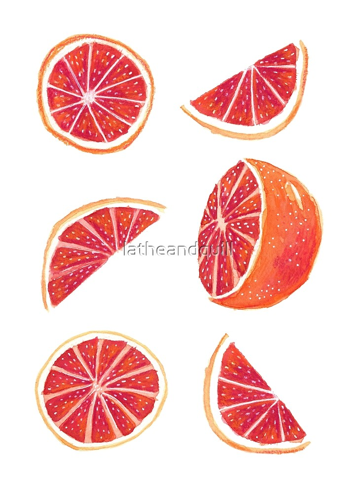 Watercolor Blood Orange by latheandquill