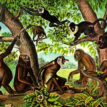 PRIMATES by planetterra