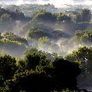 Bosque Fog by © Loree McComb