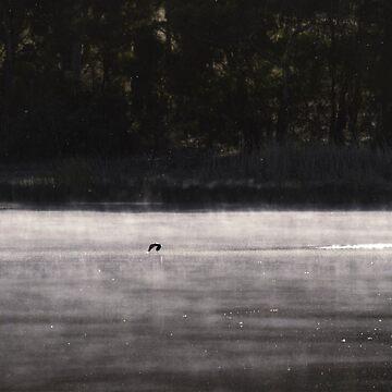 Morning Glide by joyphillipsart