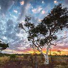 Fairy Floss Sunset by Robert Armitage