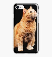 Red cat on black background iPhone Case/Skin