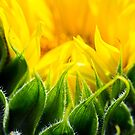 Unfolding gold by WendyJC