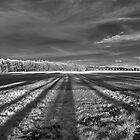 Fields SW by Mark Bangert