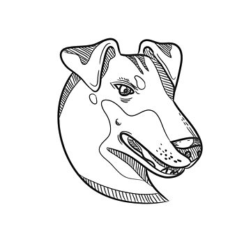 Manchester Terrier Head Drawing by patrimonio