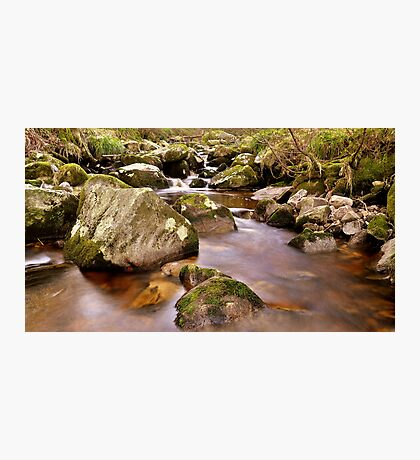 Woodland Stream at Glencree co, Wicklow. #2 Photographic Print