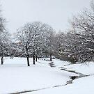 Snow in Highland Village by Colleen Drew