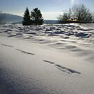 Traces in the snow by christopher363