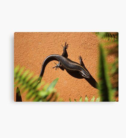 African Striped Skink (Trachylepsis striata) Canvas Print