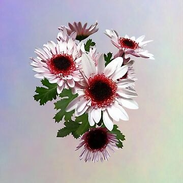 Light Pink Mums With Dark Pink Center by SudaP0408