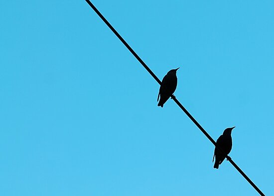 Birds On A Wire by EmilyHoefman
