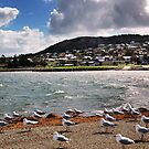 Albany, Western Australia.  by Eve Parry