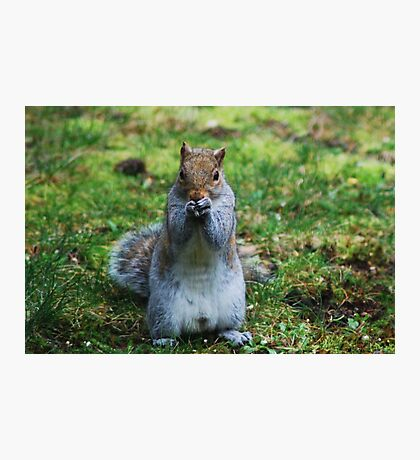 Friendly Squirrel  Photographic Print