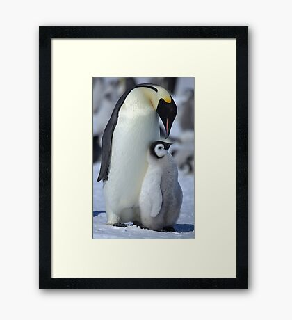 Snowhill Emperor and Chick Framed Print