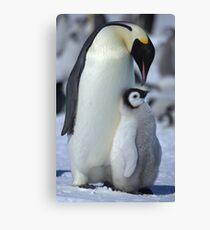 Snowhill Emperor and Chick Canvas Print