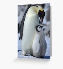 Snowhill Emperor and Chick Greeting Card