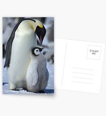 Snowhill Emperor and Chick Postcards