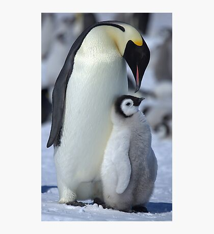 Snowhill Emperor and Chick Photographic Print