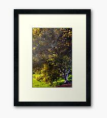 We'll Meet Under the Tree Framed Print