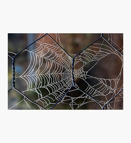 Cobwebs on the Fence Photographic Print