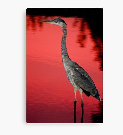 Blue Heron at Sunset Canvas Print