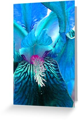 Aquamarine Iris by Ann  Warrenton
