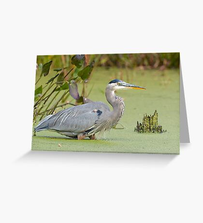 Walk in the Pond Greeting Card