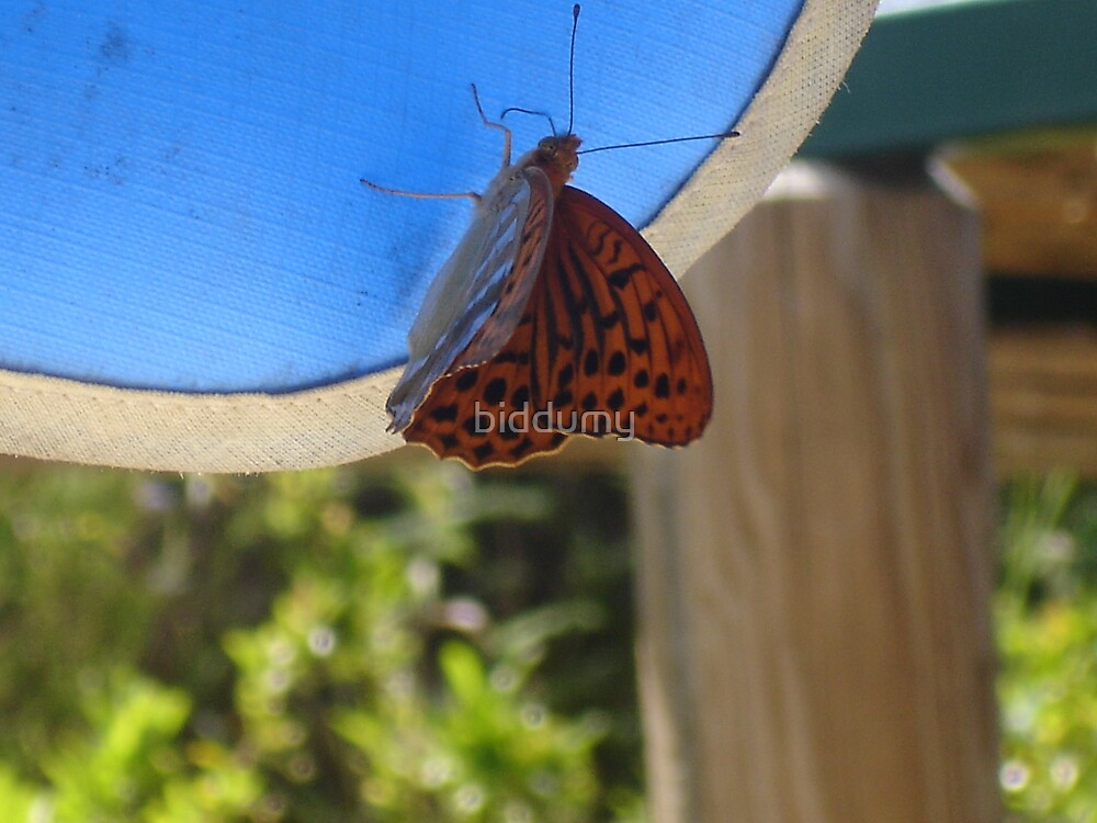 Butterfly on the canopy by biddumy